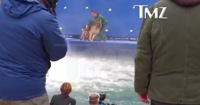 """""""¿Por qué mostrar el video tras 15 meses?: autor de """"A dog's purpose"""" responde a críticas por maltrato animal"""""""