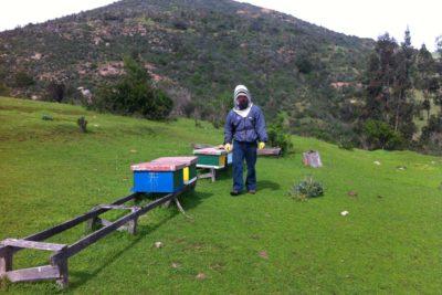 Fuego consume primera y única Zona de Reserva de abejas de Chile y Sudamérica