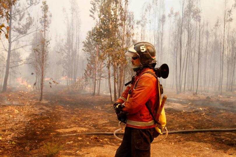 Incendios forestales: oportunidad para hacer política pública a largo plazo