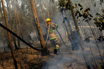 Onemi: Incendios en combate aumentan a 83 y focos activos ascienden a 151