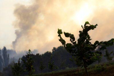 Onemi: incendio en Parral está controlado y se redujo alerta Roja a Amarilla