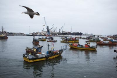 """Pescadores de Chile evalúan interponer querella contra el Estado por """"mal manejo de la industria"""""""