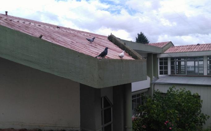Cesfam de Osorno se derrumba tras exceso de lluvias y fecas de palomas en el techo