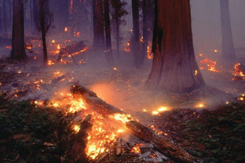 VIDEO |La innovadora técnica que se utiliza en Tailandia para reforestar sus bosques tras incendios