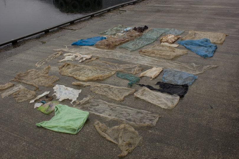 Científicos noruegos sacrificaron a ballena que tenía más de 30 bolsas de plástico en su estómago