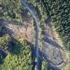 bosques y plantaciones - DanielCasadoWWWFChile