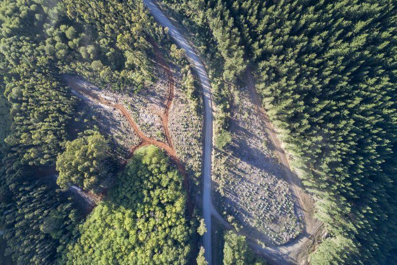 Cinco tareas clave del nuevo Servicio Nacional Forestal, según WWF Chile