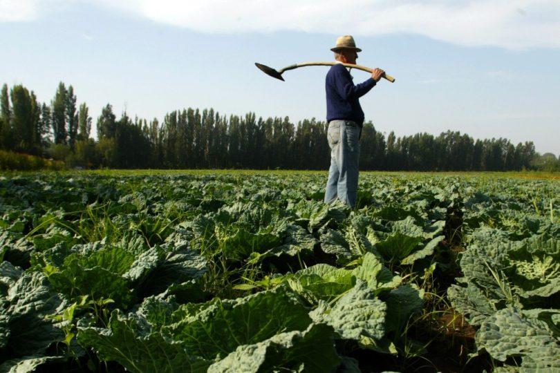 Qué hacer con el virus Hanta: ocho recomendaciones para trabajadores que se exponen a esta amenaza