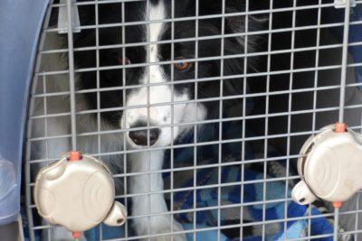 Digno de imitar: Perros y gatos podrán viajar Metro de Buenos Aires
