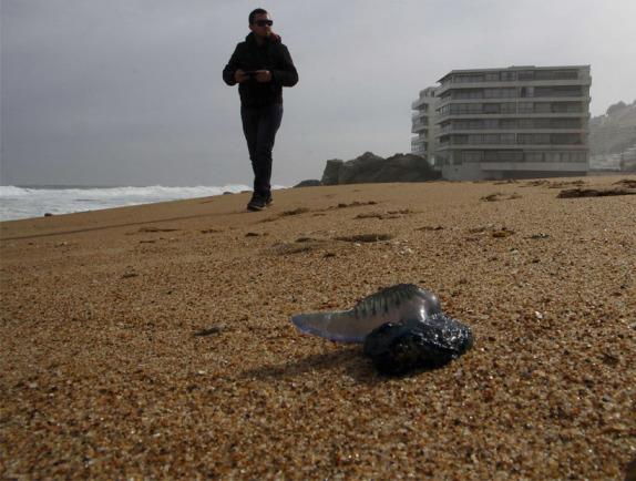 Prohíben bañarse en tres playas de Viña del Mar por presencia de fragata portuguesa