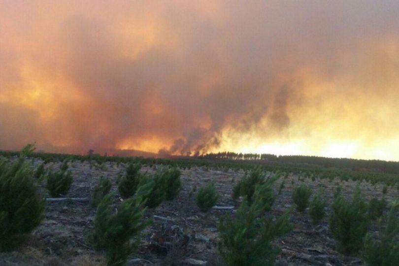 Incendio en Parral sigue activo: 40 viviendas destruidas y más de 4 mil personas evacuadas preventivamente