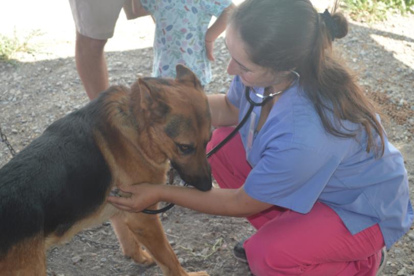 FOTOS   Más de mil animales han sido atendidos en hospital de campaña de incendios forestales