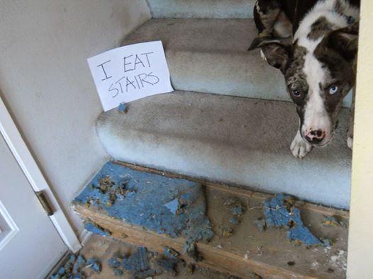 """Mirada de """"culpa"""" de los perros al desobedecerte no sería lo que realmente piensas: experta derriba el mito"""