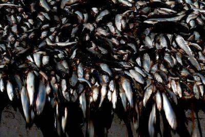 Caso Asipes: entregan nómina de aportes reservados legales de pesqueras a 35 políticos por 333 millones