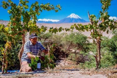 El gran salto del Ayllu, el vino chileno que se produce a 2.400 metros de altura