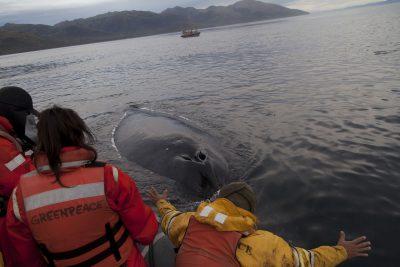 VIDEO | Expedición de Greenpeace en Magallanes registra increíble encuentro con ballena jorobada