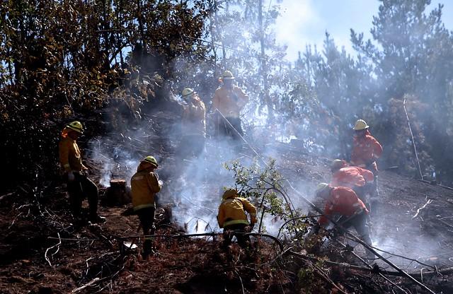 Cómo prevenir incendios forestales: especialistas apuntan a la planificación urbana
