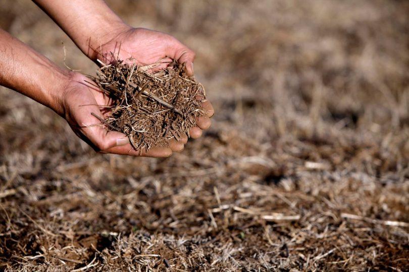 Sequía y Desertificación, un problema nacional y mundial