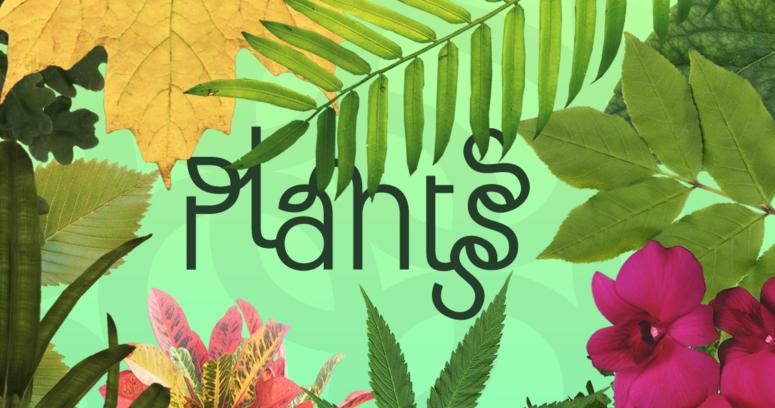 Plantsss: la aplicación chilena que obtuvo el primer lugar en MIT Global Startup Workshop