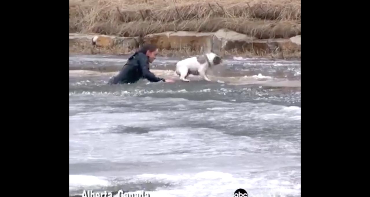 La arriesgada maniobra de un hombre para salvar a su perro