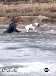 VIDEO  Amor de verdad: la arriesgada maniobra de un hombre para salvar a su perro de un estanque congelado