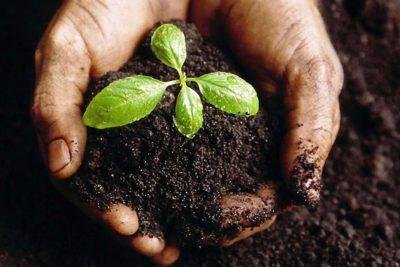 CMPC emite millonario bono para financiar proyectos sustentables