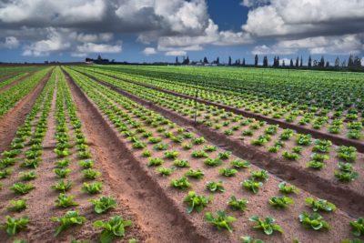 La presencia de fertilizantes en la agricultura en tiempos del cambio climático