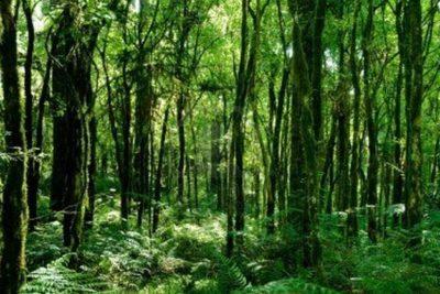 El 16% de todas las especies de árboles del mundo se encuentran en peligro de extinción