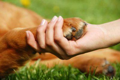 """Se aprueba la """"ley cholito"""", el proyecto sobre tenencia responsable de mascotas"""
