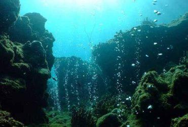 Científicos descubren nuevos virus en los océanos