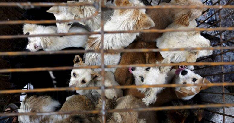 """""""Taiwán prohíbe el consumo humano de carne de perro y gato"""""""