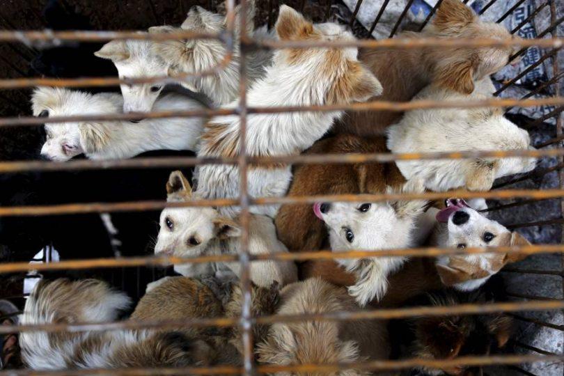 Taiwán prohíbe el consumo humano de carne de perro y gato