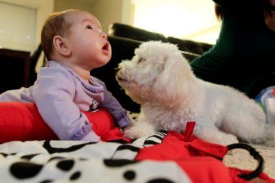 Mascotas ayudan a reducir el desarrollo de alergias y la obesidad en los bebés