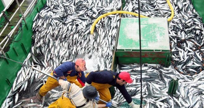 Pescadores artesanales indignados con el Gobierno: acusan doble estándar en cuidado de recursos