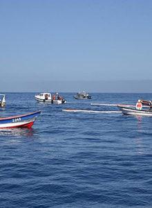 Científicos detectan plástico en centollas de Magallanes