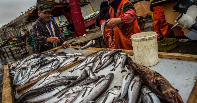 """""""WWF Chile: """"Hay que profundizar esfuerzos para avanzar hacia una pesca sustentable"""