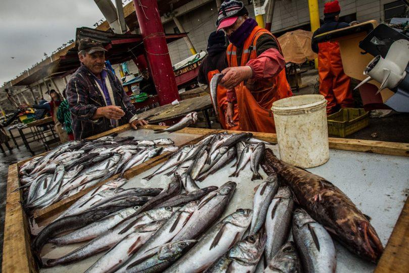 """WWF Chile: """"Hay que profundizar esfuerzos para avanzar hacia una pesca sustentable"""""""