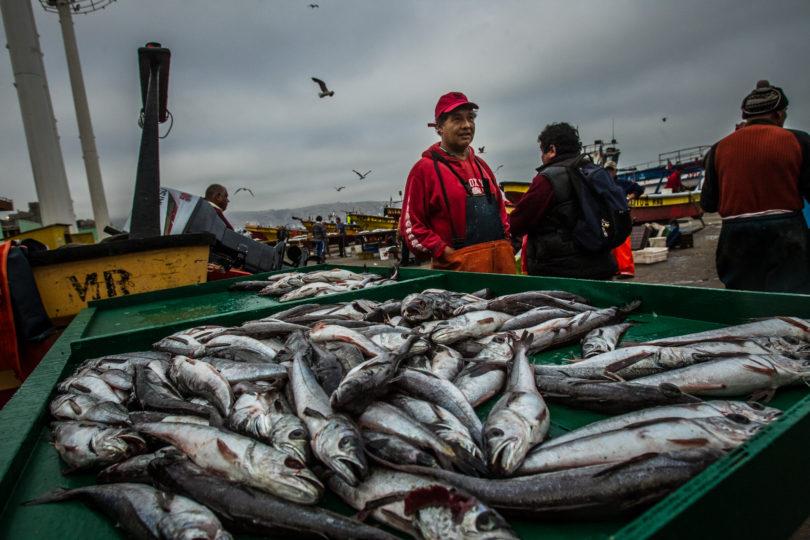 """Biólogo marino y sobrexplotación de pesquerías: """"Existe riesgo de que no se puedan recuperar"""""""