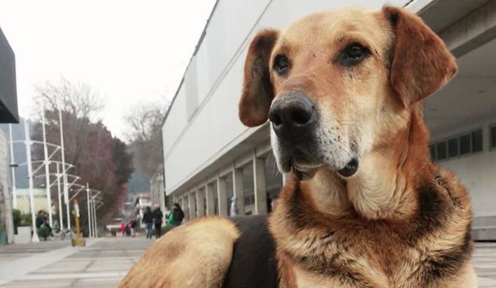 VIDEO | La emotiva despedida que le dedicó la UdeC a Sir Perro