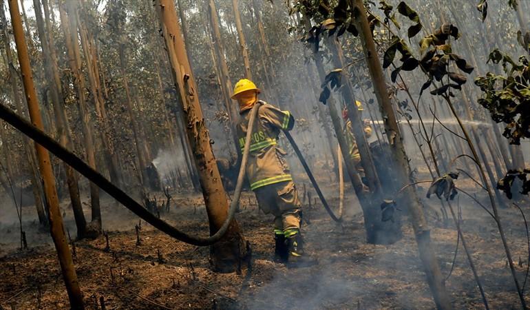 """CGE paga $150 millones para reparar el """"mal causado"""" en incendios forestales del verano"""