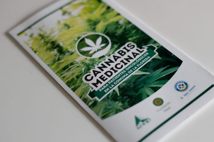Científicos chilenos denuncian que cannabis medicinal no sirve para curar enfermedades