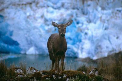 """""""Arca de Noé"""" en Chile: el proyecto de la U. de Concepción para conservar ADN de especies en peligro"""