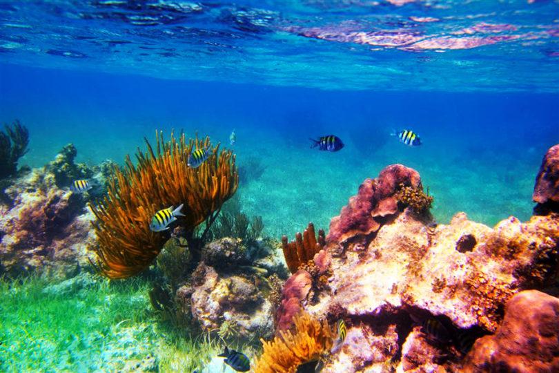 Arrecifes de coral: primeras víctimas masivas a nivel mundial del cambio climático