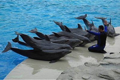 Francia prohíbe la cría de delfines y ballenas en cautiverio
