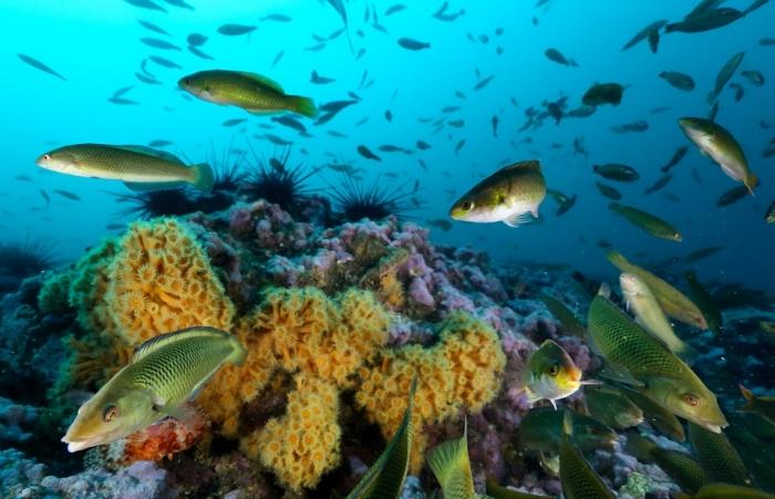 National Geographic descubre el lugar de Chile con mayor cantidad de peces