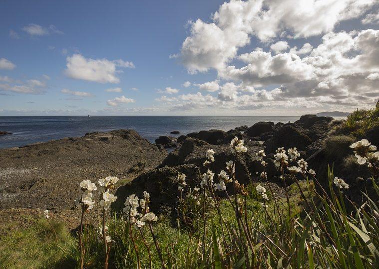 Lanzan campaña para la creación de un Parque Marino en la zona de isla Guafo