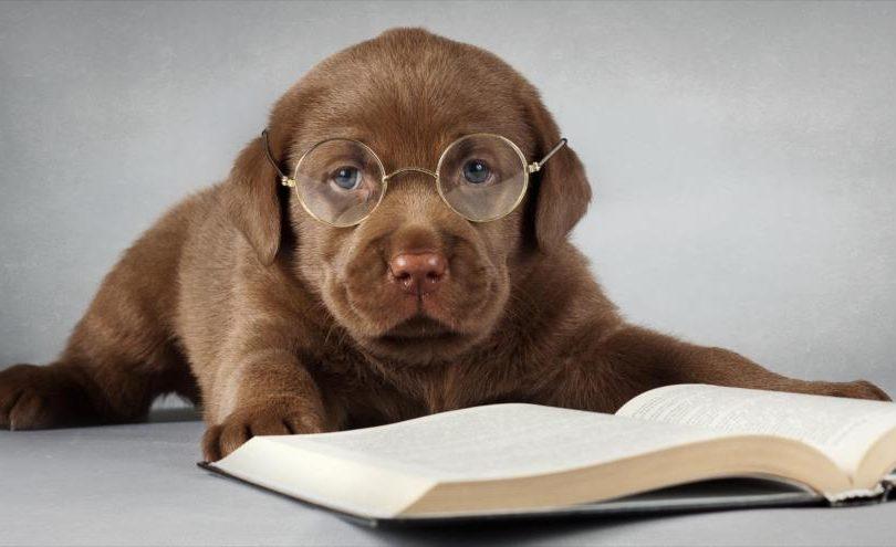¿Sabías qué? Conoce estos cinco datos científicos sobre los perros