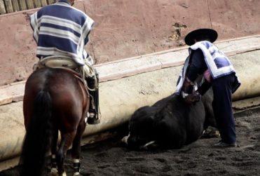 Toro intentó escapar de huasos en rodeo: siete menores heridos