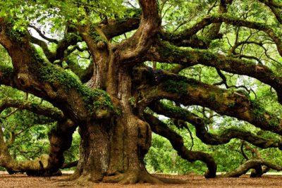 En el día del Medio Ambiente: Democracia para defender la naturaleza