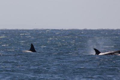 Día de los Océanos: WWF invita a crear una red de Áreas Marinas Protegidas en la Patagonia